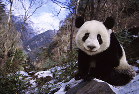 Into the home town of Giant Panda ---Wolong
